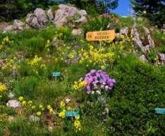Alpengarten Villacher Alpe