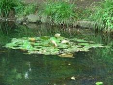 Kleinsee in Sankt Kanzian